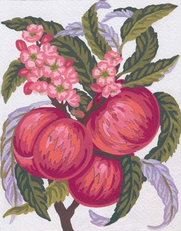 Needlepoint Canvas 14x18cm Peaches