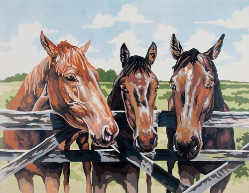 11500 Needlepoint Canvas 50x40cm Three Amigos