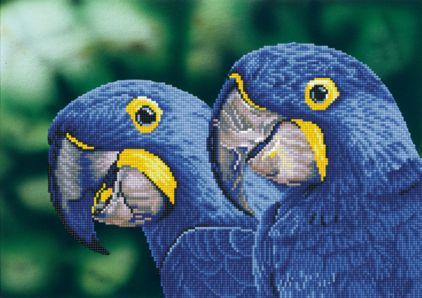 DD9.023 DIAMOND DOTZ® - 52x37cm - Blue Hyacinth Macaws
